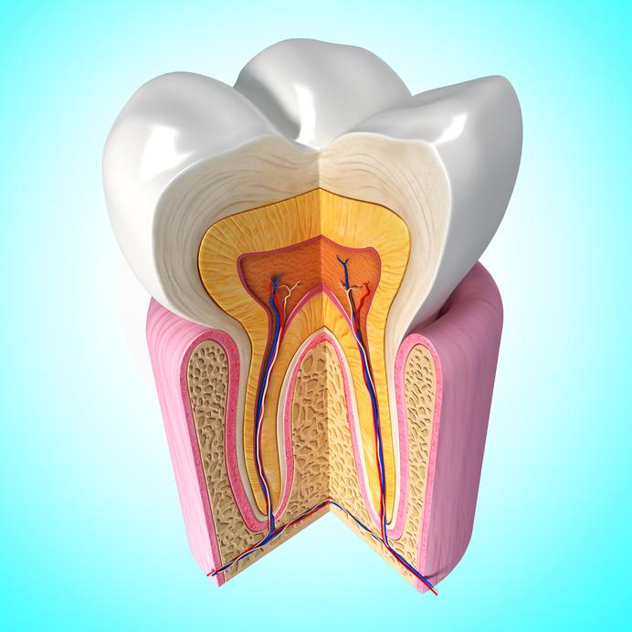 inside of your teeth